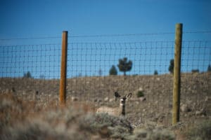 Deer at fence by Joe Riis