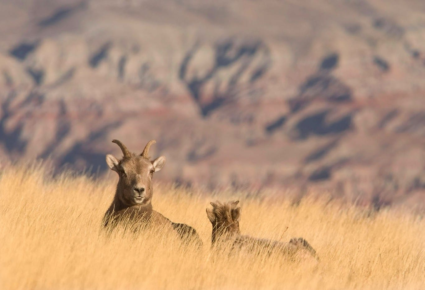 Recovering America's Wildlife Act